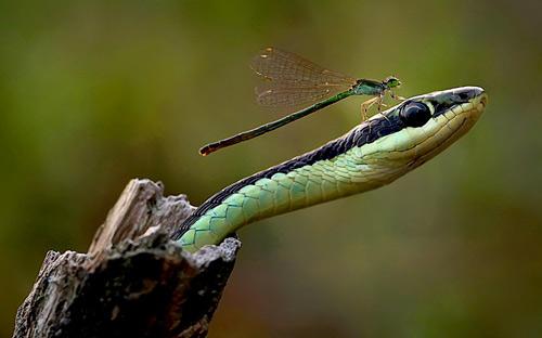 Những hình ảnh động vật đẹp nhất tuần qua