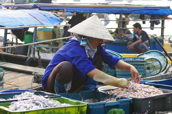 Buổi sáng yên bình ở chợ cá Cẩm Phả