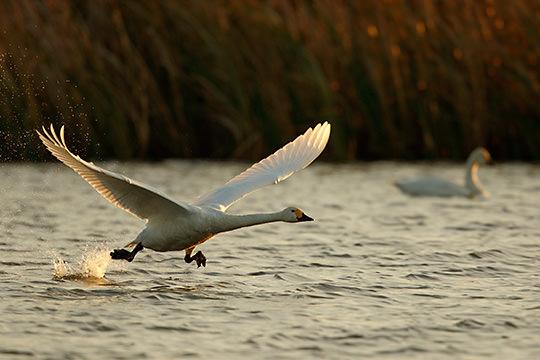 Chụp Lúc Chim Cất Cánh