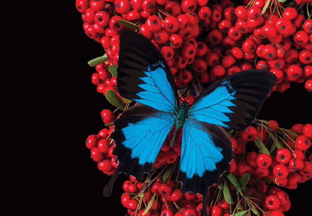 Giới thiệu về in ảnh Fine-Art: Ánh sáng ảnh hưởng như thế nào đến màu sắc