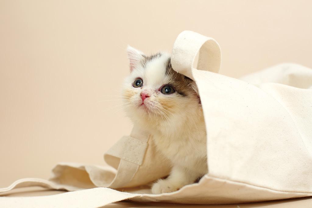 Chụp Ảnh Mèo: Kỹ Thuật Catchlight và Các Thủ Thuật Khác