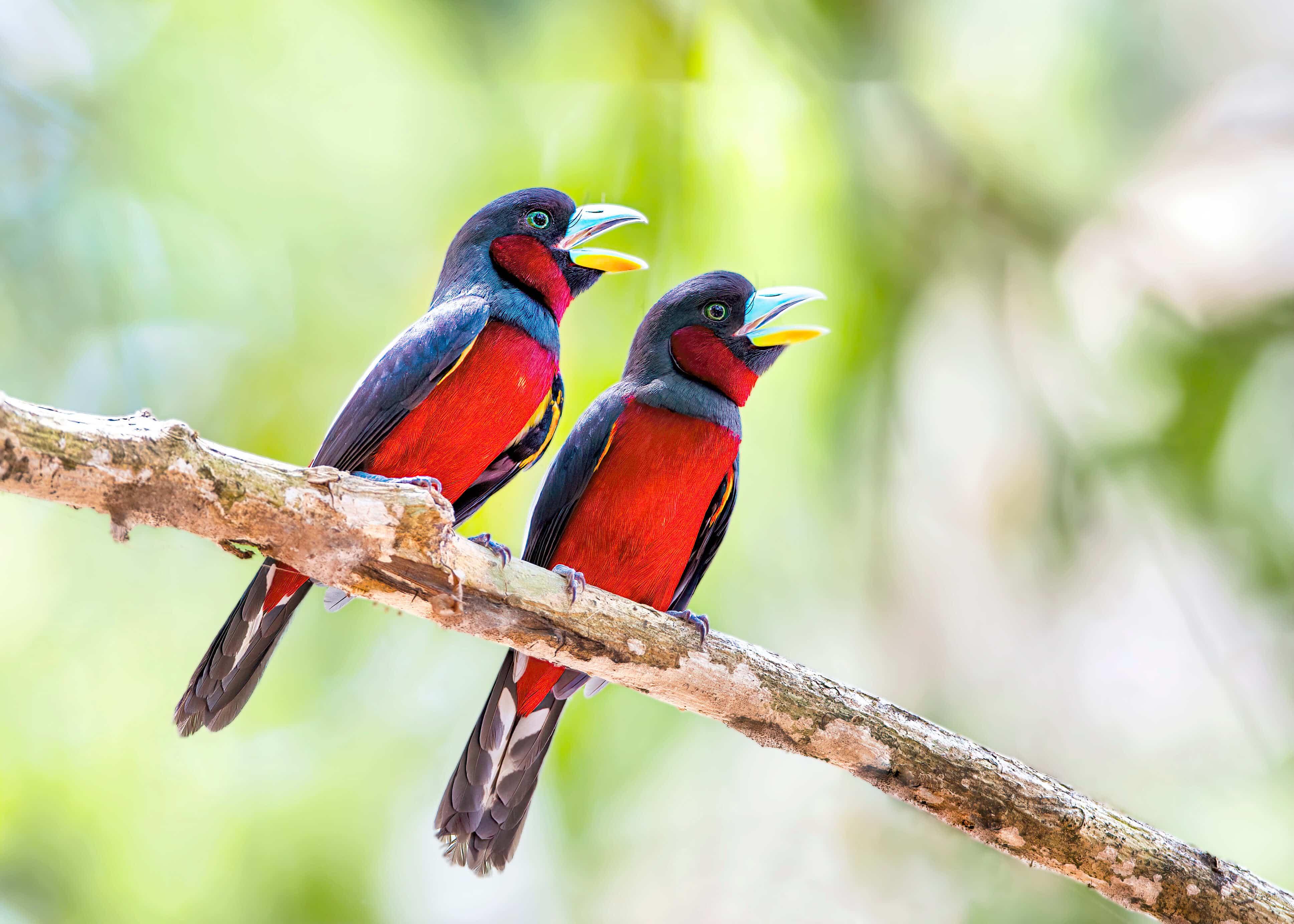 Những chú chim vạn người mê – NAG Đức Hùng